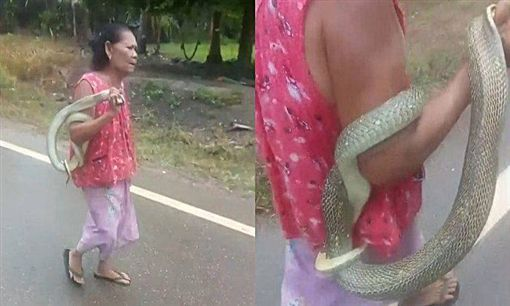 泰國,蛇妮醫,眼鏡蛇,咬傷(圖/翻攝自泰國網)