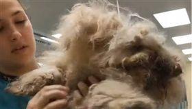 美國,小狗,獅子心,拋棄。(圖/翻攝自臉書Richmond SPCA)