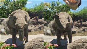 大象,帽子,靈性,臺北市立動物園,小孩,溫馨,吶喊,幫忙, 圖/翻攝自Kelly Tseng臉書