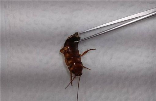 台東,蟑螂,耳膜,蒼蠅,疼痛