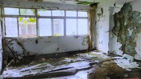 它吞掉了整棟房子…恐怖樹噬屋成傳說 北新公寓