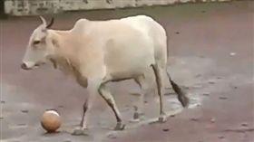 公牛旁觀足球賽…球滾到牠腳下 防守開關竟然打開不還人家(圖/翻攝自@bhogleharsha Twitter)