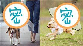 狗狗專用雨傘