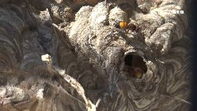 蜂窩低颱多1800