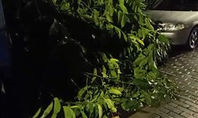 男子鋸樹摔落身亡