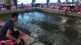 宜颱天釣蝦1200