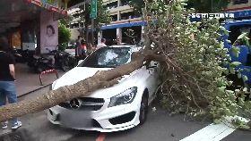 樹倒問國賠1200