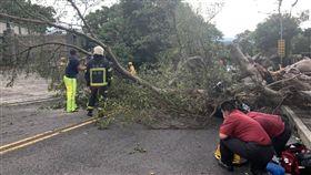 颱風,騎士,路樹,台北,翻攝畫面