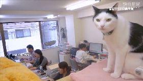 日吸貓公司1600