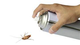蟑螂。(圖/翻攝自推特)