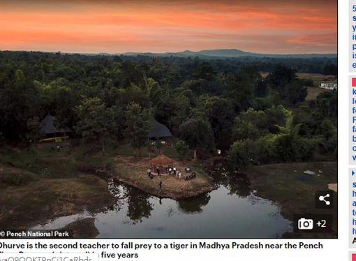 印度,老虎,獵食,森林(圖/翻攝自每日郵報)