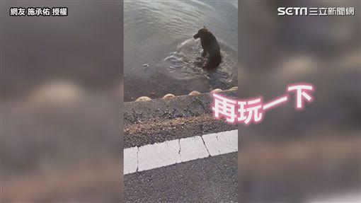 ▲黑狗「妹妹」在水田裡玩開了。(圖/網友 施承佑  授權)