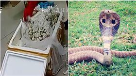 網購,江西,蛇蛋,眼鏡王蛇,包裹(圖/翻攝自火鍋視頻、PIXABAY)