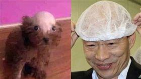 韓國瑜,韓粉的寵物 圖/高市府提供,翻攝自臉書草包沒有派對–韓總嘉言錄