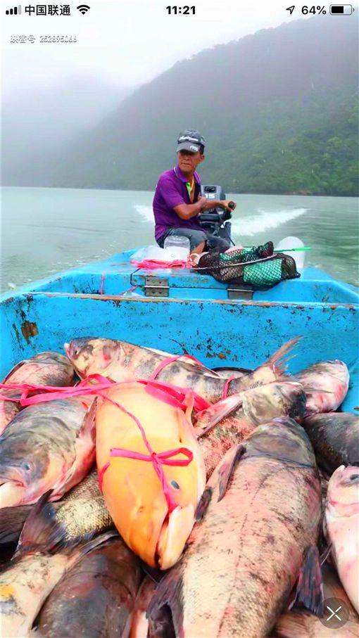 黃金大頭鰱, 石門水庫, 張文田, 漁民, 大壩頂活魚餐廳
