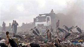 印度,貧民,垃圾場,布洛根,大禿鸛。(圖/翻攝自推特)