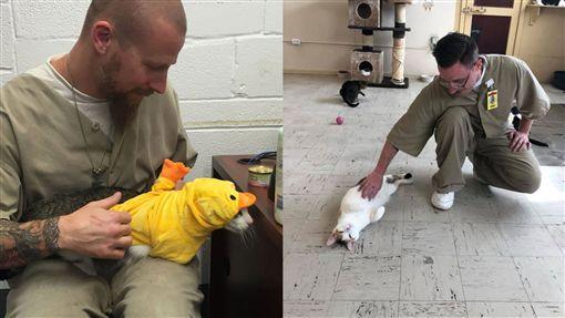 把受刑人變貓奴!美國監獄引進貓貓典獄長 犯人全都被融化圖/翻攝自Twitter