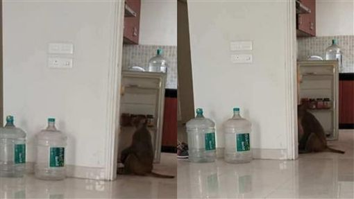 冰箱,小偷,猴子,爆笑公社 圖/翻攝自臉書爆笑公社
