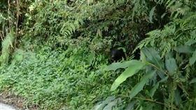 台東縣,海端鄉,紅石林道,黑熊,自身安全(圖/民眾提供)中央社