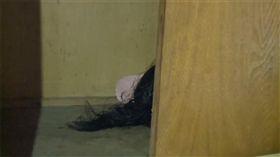 她租新套房 開衣櫃滾出「長髮頭顱」(圖/翻攝自看看新聞)