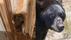 黑熊,美國,闖空門,進食期,牆壁,破牆,撞牆,動,動物,崩潰, 組合圖/翻攝自臉書、pixabay