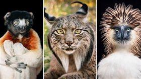 驚豔!6大「瀕危物種」絕美身影曝光