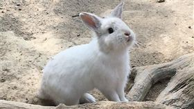 兔子,記者劉沛妘 攝