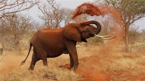 大象(圖/取自Pixabay)