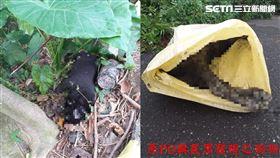 殺12犬…嘉義毒狗兇手找到了!農民自首泣:我的筍被咬壞(嘉義市動物守護協會理事長吳育才授權提供)