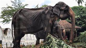沒人看到她淚水…70歲母象被逼遊行 掀開華服「皮包骨」 圖翻攝自Save Elephant Foundation臉書