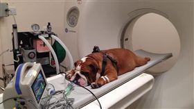 狗,健康檢查,斷層掃描。(圖/翻攝自Medicine Meets Technology臉書)