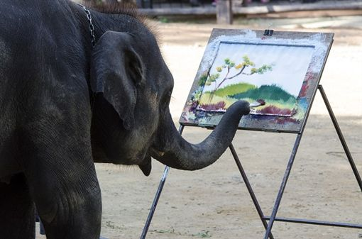 4 大象學校/湄登象園(MAE TAENG ELEPHANT CAMP)shutterstock_399298540.jpg