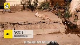 重慶柴犬遭砍斷四腳掌,棄屍路邊承受40度高溫曝曬變乾屍(圖/梨視頻)