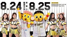 阪神甲子園球場與中信兄弟合作主題日。(圖/中信兄弟提供)