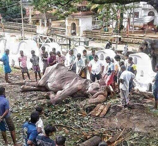 畫面曝光!皮包骨70歲母象垂死 眾人圍觀卻無人能助(圖/翻攝自Save Elephant Foundation臉書)
