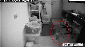 花蓮6級地震,家裡的虎斑貓被嚇到狂奔。(圖/當事人提供)