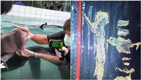 又是塑膠惹的禍!泰國保育人員4月時,在西南部的海岸救起一隻儒艮(dugong)寶寶,將牠帶回保育中心悉心照顧,儒艮寶寶被取名「瑪瑞姆」(Marium),保育人員經常將牠可愛的模樣拍照上傳,讓瑪瑞姆意外爆紅。但17日時,保育人員發現瑪瑞姆出現異狀,之後便不幸死亡,獸醫解剖後才知道,原來瑪瑞姆的胃部被塑膠製品塞滿,導致胃壁化膿引發敗血症。(圖/翻攝自@jamiefullerton1推特)