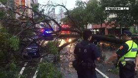 路樹倒砸車0800(DL)