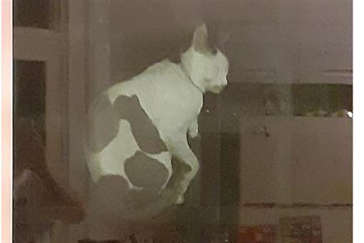 靈異公社,貓,農曆7月,鬼月,寵物