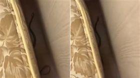 床單,被單,蛇,房間(圖/翻攝自爆怨公社)