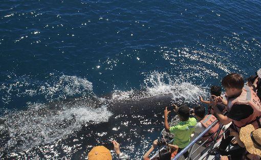 用特別方式打招呼 作家替抹香鯨命名長期關注海洋生態的作家廖鴻基觀察到一頭抹香鯨,總以特別噴水方式向人類打招呼,替牠取名「花小香」,廖鴻基認為花小香是帶著訊息而來,要提醒人類反思海洋生態教育的重要。(賞鯨業者提供)中央社記者李先鳳傳真 108年8月19日