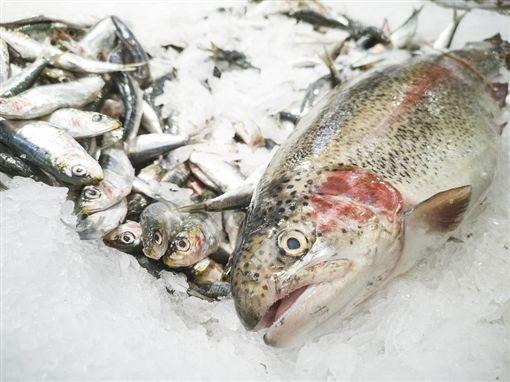 ▲魚(圖/翻攝自pixabay)