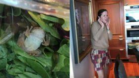 沙拉,青蛙,有機,生菜,蔬果,農藥,昆蟲,動物,寵物,退款,品管, 圖/翻攝自推特