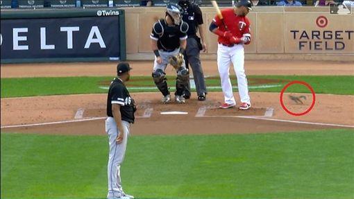 ▲雙城在主場迎戰白襪,1隻松鼠跑進場。(圖/翻攝自MLB官網)