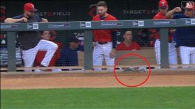▲松鼠跑進雙城休息區。(圖/翻攝自MLB官網)