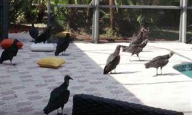 美國,禿鷹,豪宅,度假,腐屍。(圖/翻攝自youtube)