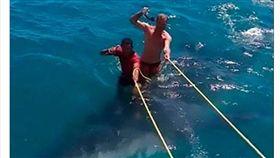 國外觀光客慘忍對待鯨鯊,遭眾網友與當地居民痛批。(圖/翻攝自太陽報)