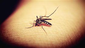 蚊子(圖/pixabay)