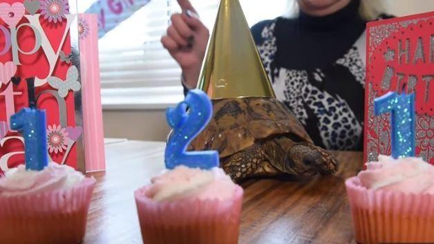世界最高齡的烏龜!歡慶121歲生日 飼主曝「長壽秘訣」