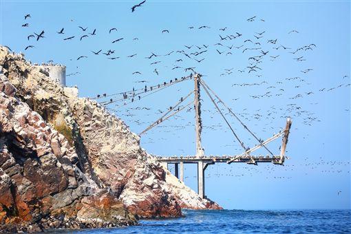 ▲巴雷斯塔斯島漫天的飛鳥(圖/shutterstock.com)